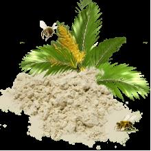 Пальмовая пыльца для преображения организма и возвращения утраченных функций